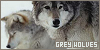 Canines : Grey wolves