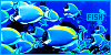Aquatic animals: Fish